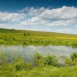 Swamp landscape with iris flowers — Stock Photo