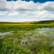 Swamp landscape with iris flowers — Stock Photo #12321339