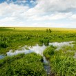 Swamp landscape with iris flowers — Stock Photo #12321342