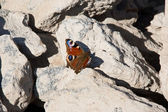 Butterfly on stones — Stock Photo