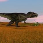 Постер, плакат: Tyrannosaurus