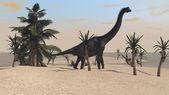 Gigant brachiosaurus dinosaur — Stock Photo