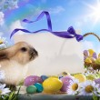 Easter card with eggs and spring flowers - Stock Photo