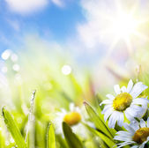 Sztuka tło springr kwiat w trawie na niebie słońce — Zdjęcie stockowe