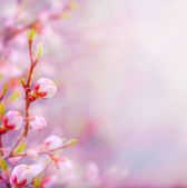 Art Beautiful spring blossoming tree on sky background — Stock Photo