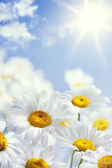 Art floral spring or summer background — 图库照片