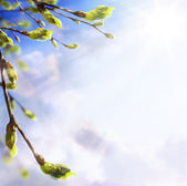 Art easters background of the young spring leaves — Stock Photo