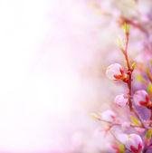 Våren fält av prästkragar och blå himmel bakgrund — Stockfoto