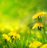 Vacker vår blommor bakgrund — Stockfoto