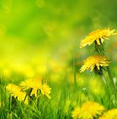 美しい春の花の背景 — ストック写真