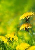 Mulher feliz com cachecol em amarelo — Foto Stock