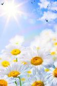 Arte floral primavera ou fundo de verão — Foto Stock