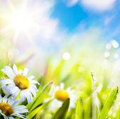 Fiore di springr astratto arte in erba sul cielo di sole — Foto Stock