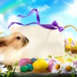 Easter bunny and Easter eggs — ストック写真