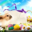 Stock Photo: Easter bunny and Easter eggs