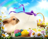 Easter bunny and Easter eggs — Stok fotoğraf