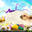 Easter bunny and Easter eggs — Stock Photo