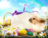 Easter bunny and Easter eggs — 图库照片