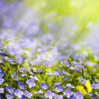 Stock Photo: Art spring wild flowers in sunlight background