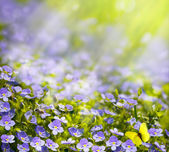 Art spring wild flowers in the sunlight background — Stock Photo