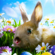 Stock Photo: art easter Baby rabbit and easter eggs