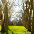 Art Sunlight in the green forest, spring time - Stock Photo