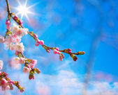 Abstract Spring border background with pink blossom — Stock Photo