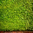 Art Fresh plants walls for background  — Stock Photo