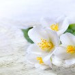 Art jasmine white flower on white wood background — Stock Photo #24154501