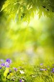 Konst våren landskap bakgrund — Stockfoto