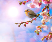 Abstract Spring border background with pink blossom — Stockfoto
