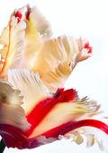 Konst vackra våren tulpan blommor — Stockfoto