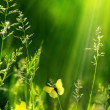 Stock Photo: Abstract summer floral green nature background