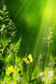 Abstract summer floral green nature background — Stock Photo
