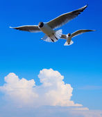 Art Seagull in blue sky background — Stock Photo