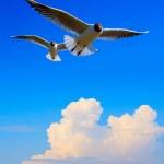 Art flying bird in blue sky background — Stock Photo