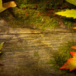 Stock Photo: Art autumn leaves on old wood background