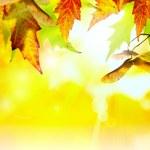 Art abstract autumn background — Stock Photo