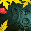 Abstract autumn Rain background fall yellow leaves — Stock Photo #31109971