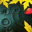 Abstract autumn Rain background fall yellow leaves — Stock Photo