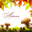 Stock Photo: Autumn background with yellow leaves and autumn mushroom
