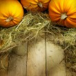 Art thanksgiving pumpkins autumn background — 图库照片 #32066927