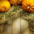 Art thanksgiving pumpkins autumn background — Stock Photo #32066927