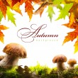 Autumn background with yellow leaves and autumn mushroom — Stock Photo
