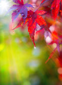Art autumn beautiful background of red leaves — Stock Photo