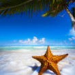 Art Sea star on the beach — Stock Photo #39611465