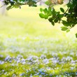 Art Sunlight in the green easter forest, spring time — Stock Photo