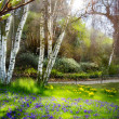 Art Sunlight in the green forest, spring time — Stock Photo