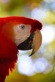 Art macaw parrot head — Stock Photo