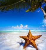 Art Sea star on the beach — Stock Photo